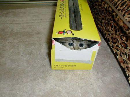 Box_Kitten.jpg
