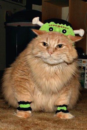 dq_cat (2).jpg