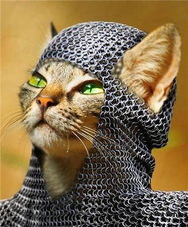 dq_cat (5).jpg